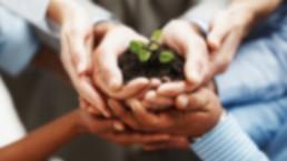group of hands nurturing a seedling